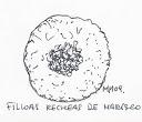 Filloas Recheas