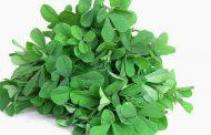 Folhas de feno-grego