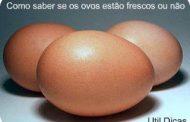 Saiba se os Ovos sao Frescos ou Estragados