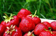 Safari Strawberry