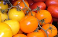 Tomate ( Lycopersicom spp. )