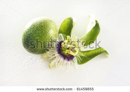 Maracujá ( Passiflora incarnata )